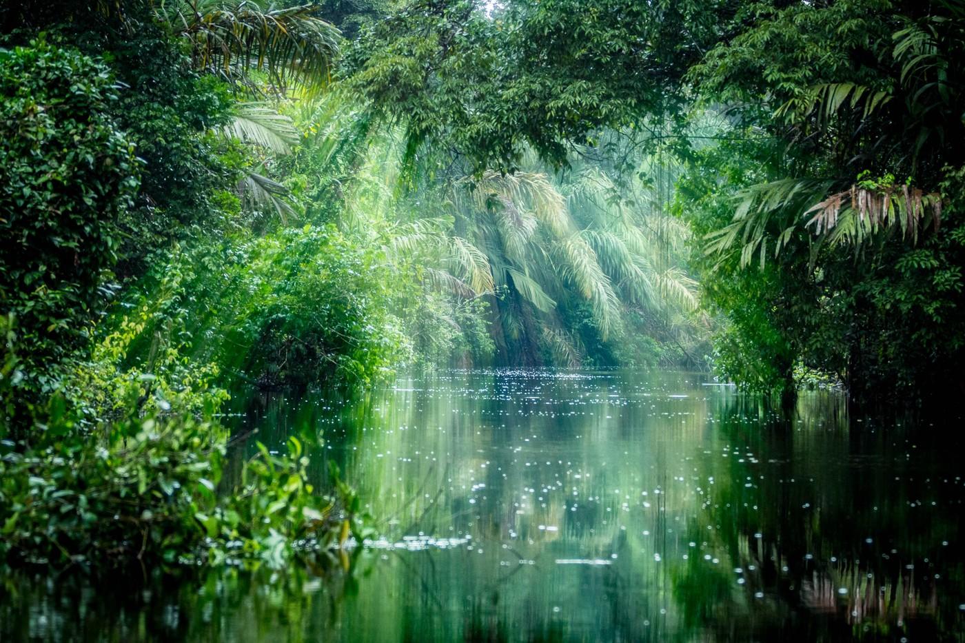 Echo也許先「聲」奪人,但亞馬遜價值共創的雨林生態系才是贏的關鍵