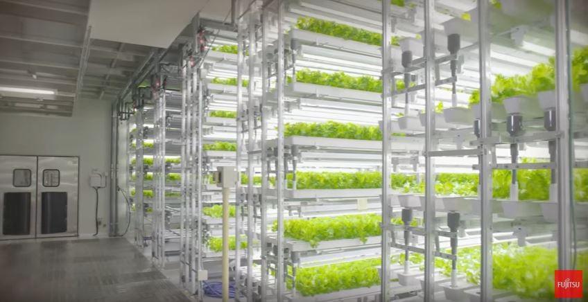 植物工廠會是新農業的解藥嗎?東芝退出、富士通搶進北歐