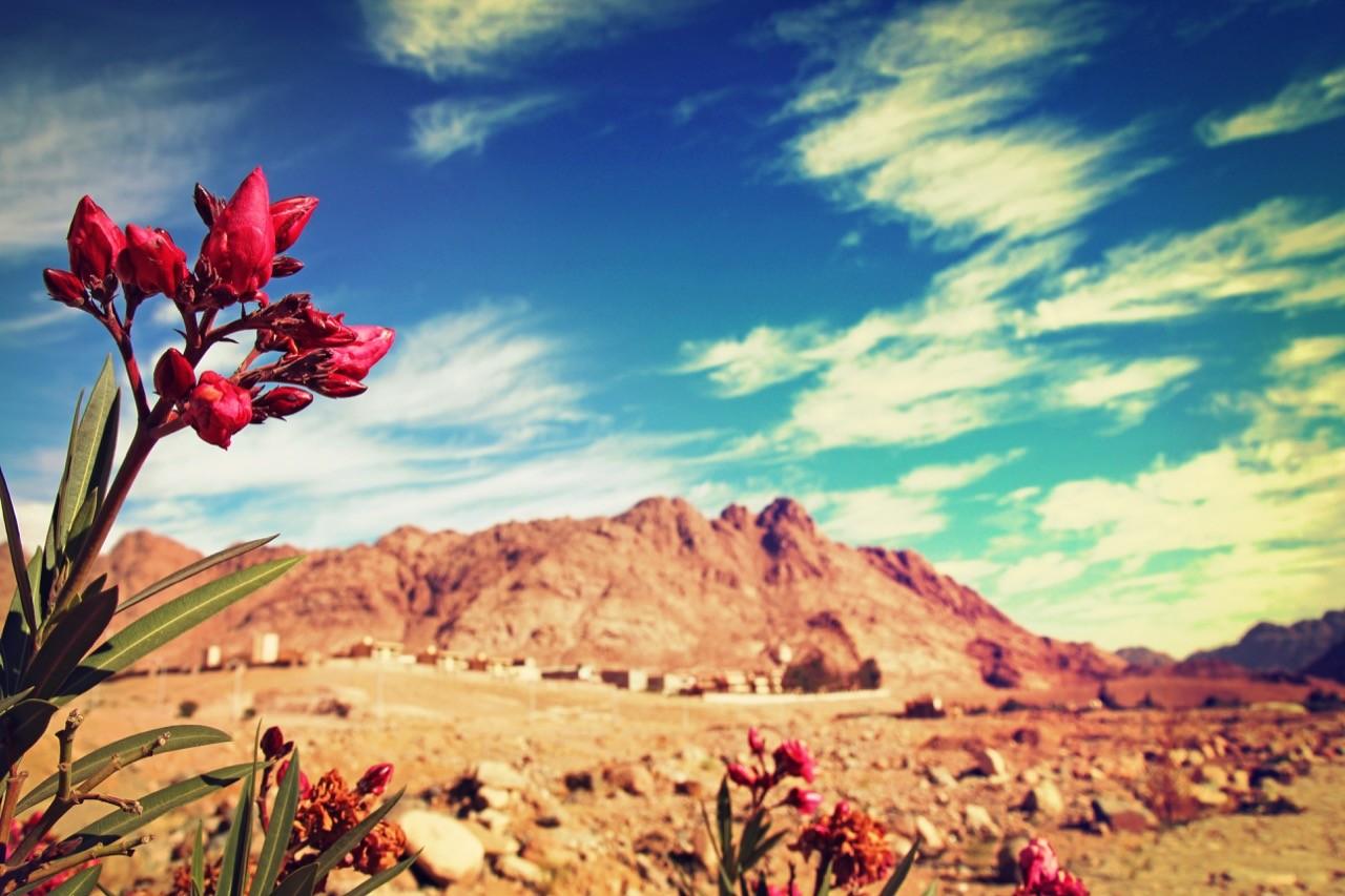 如何在沙漠裡種出玫瑰?創新人才培育的挑戰與嘗試