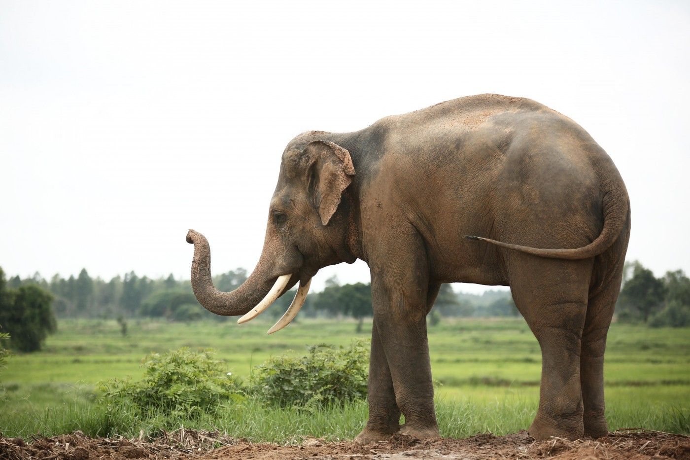 哈佛科學家將用基因編輯技術創造「混種長毛象」,稱兩年內可實現 - 華安 - ceo.lin的博客