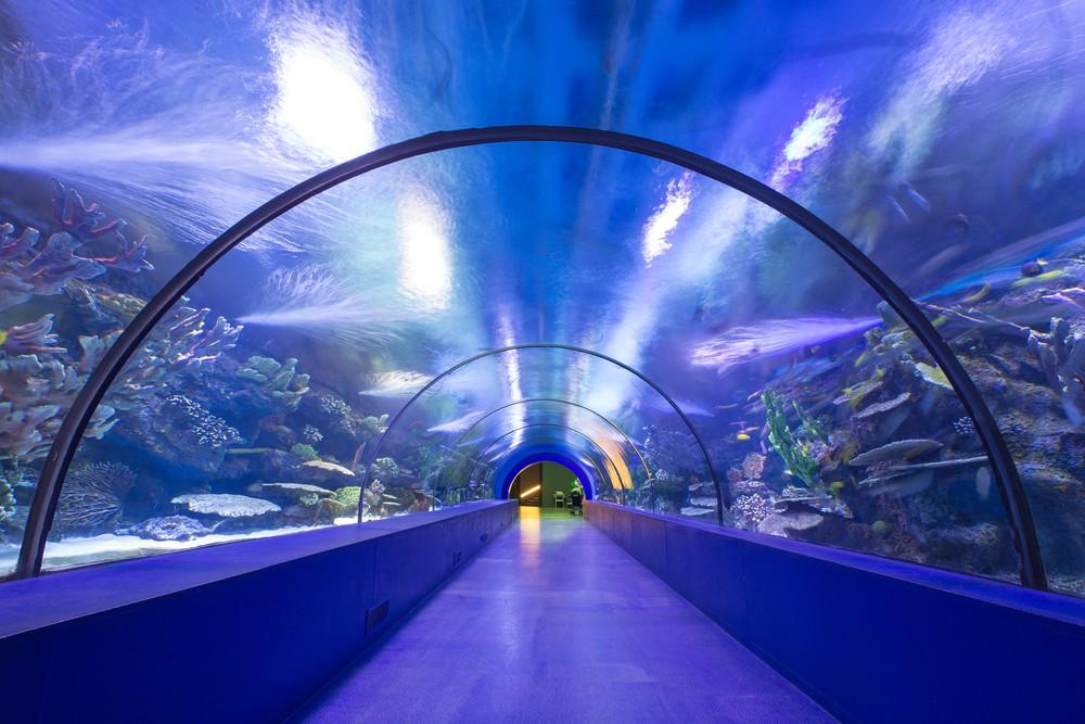 虛擬水族隧道藏有80顆鏡頭,竟是杜拜機場AI安檢新招!