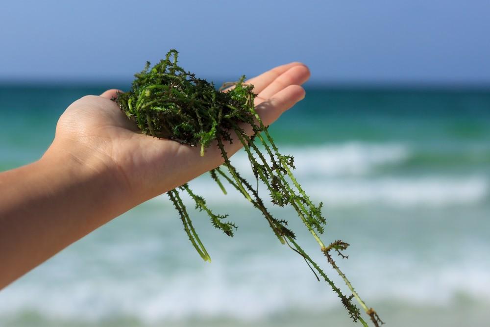 用大數據養海藻,中華電物聯網水溫監測幫台肥拉高產量