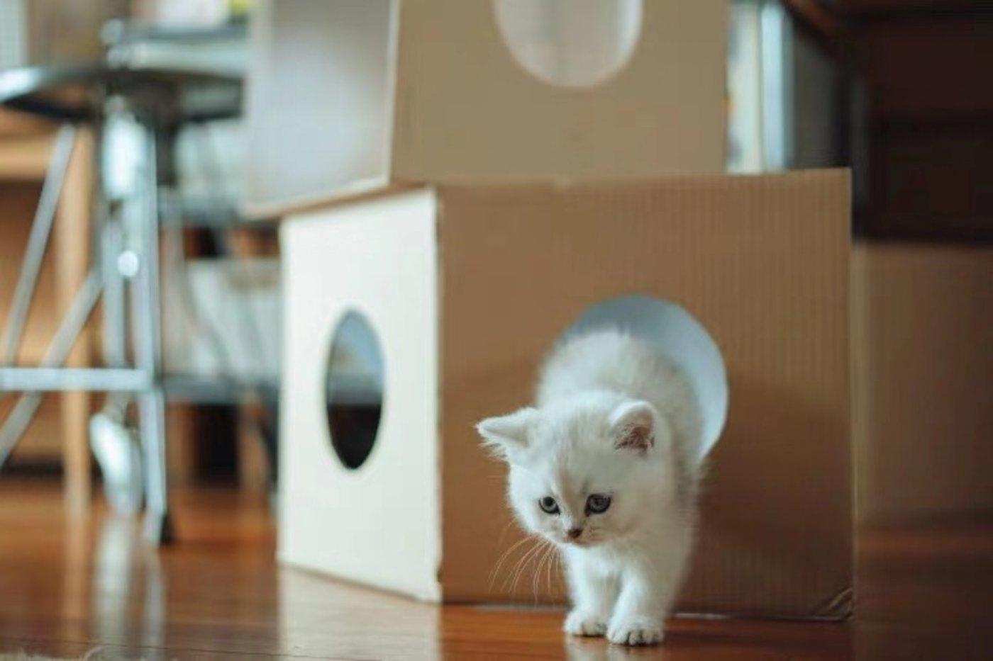 爭做寵物用品界的「無印良品」,貓砂盆、飲水機裡的品牌機會