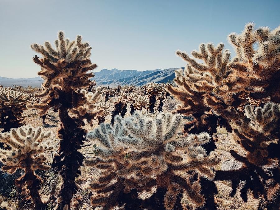 Floral-Dan Liu-Cactus under the Scorching Sun.jpg
