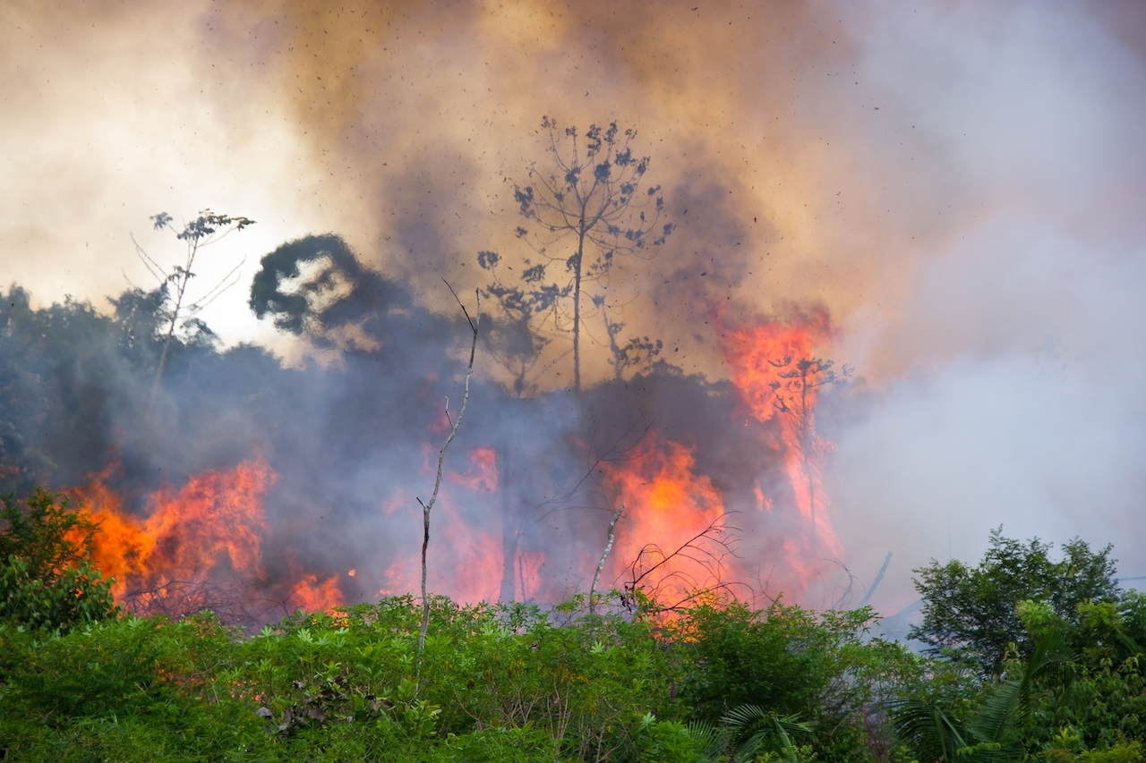 連太空都看得見濃煙!亞馬遜森林大火今年累計7萬多起