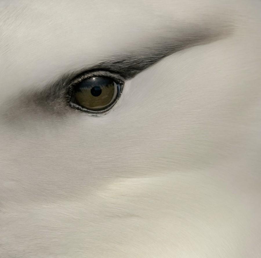 img 1566986875 61543@900 - 吐着烟圈的红翅黑鹂,跟狐狸抢猎物的秃鹰!2019 鸟类摄影奖公布,每一只都抢镜