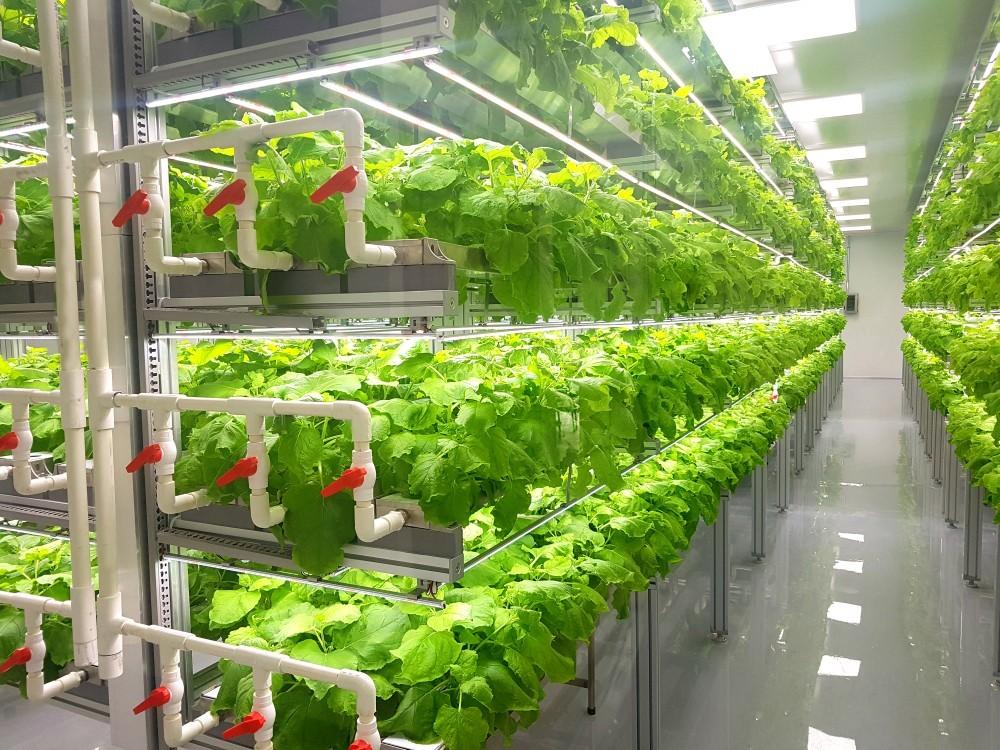 城市自耕不是夢!配備感測器與智慧輔助系統,那些都會農夫的科技農場