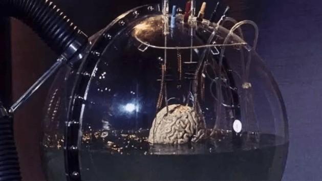 泡在培養皿中的人造大腦,居然向外界發出了胎兒般的腦電波