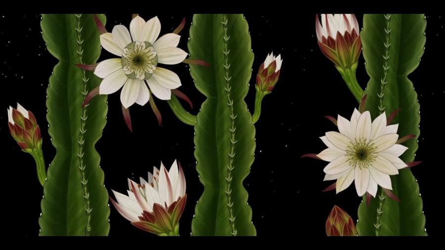 植物動畫_Story of Flowers_06.jpg