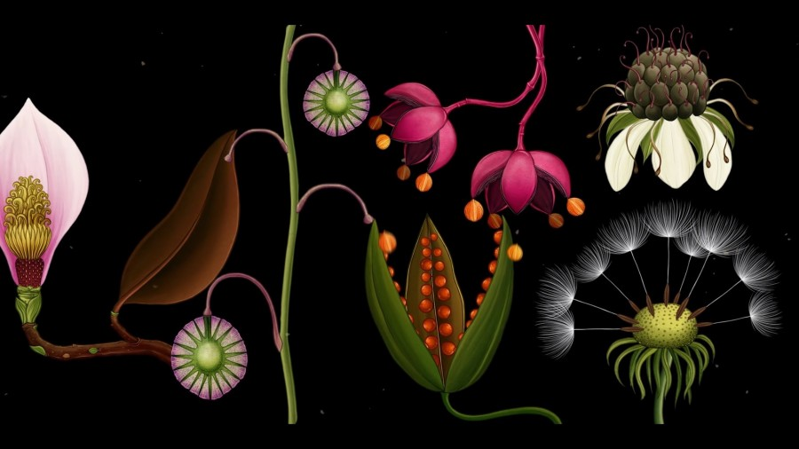 植物動畫_Story of Flowers_11.jpg