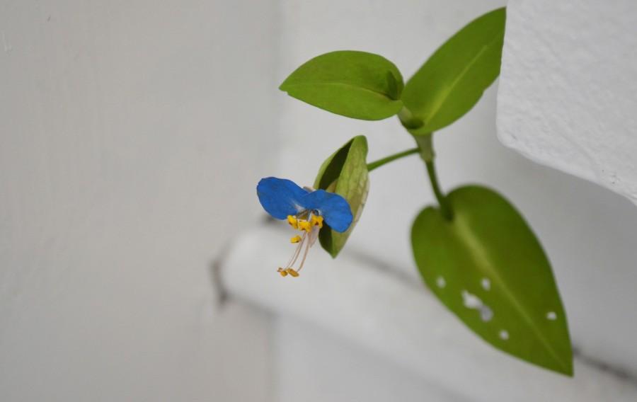 Yoshihiro Suda_木雕植物_03.jpg