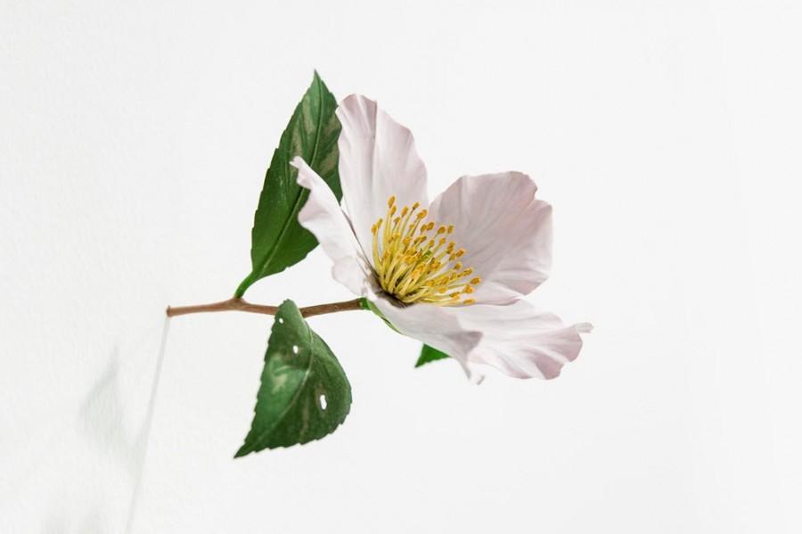 Yoshihiro Suda_木雕植物_12.jpg