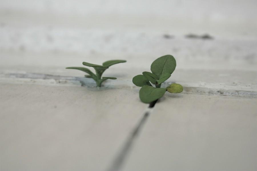 Yoshihiro Suda_木雕植物_15.jpg