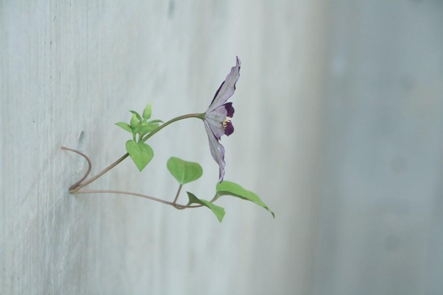 Yoshihiro Suda_木雕植物_16.jpg