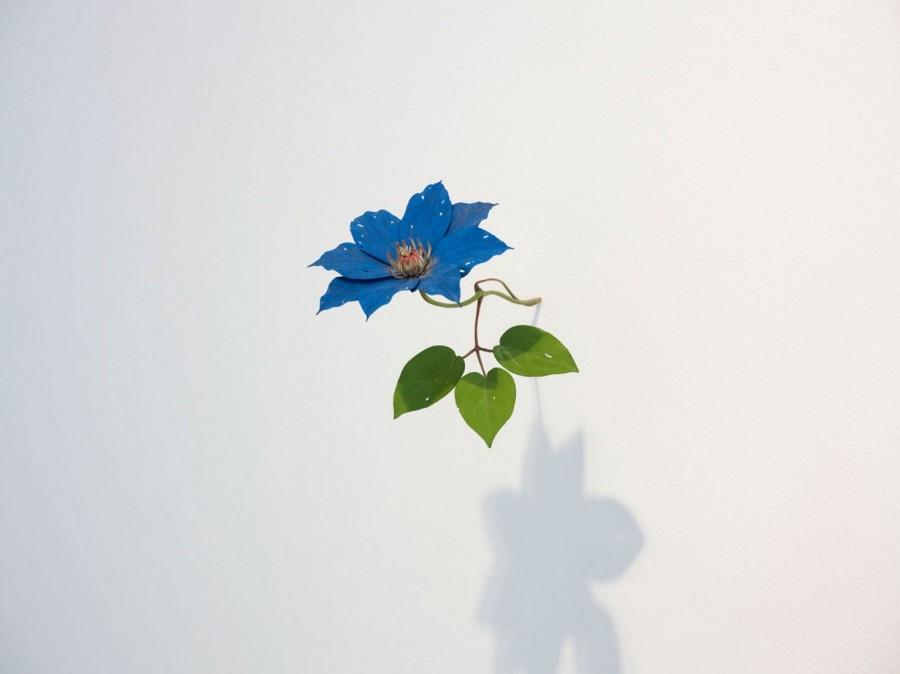 Yoshihiro Suda_木雕植物_19.jpg