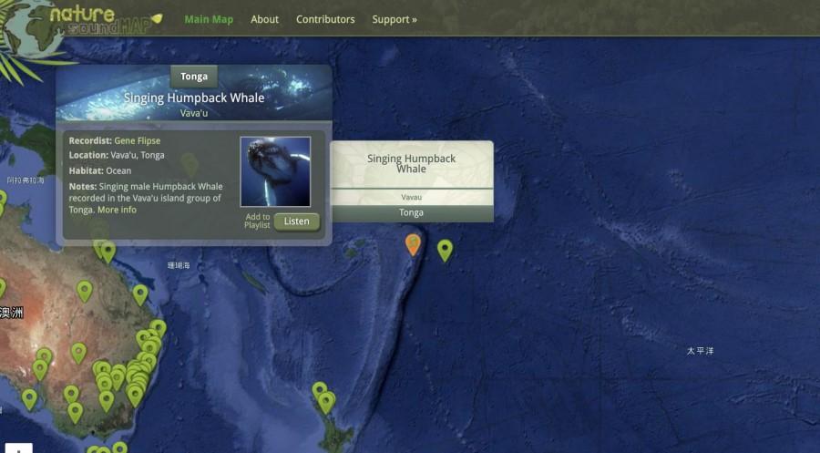 img 1584617506 95914@900 - 座头鲸高歌、阳明山蛙鸣!《自然之声地图》400 份音档,录下大自然的美妙声响