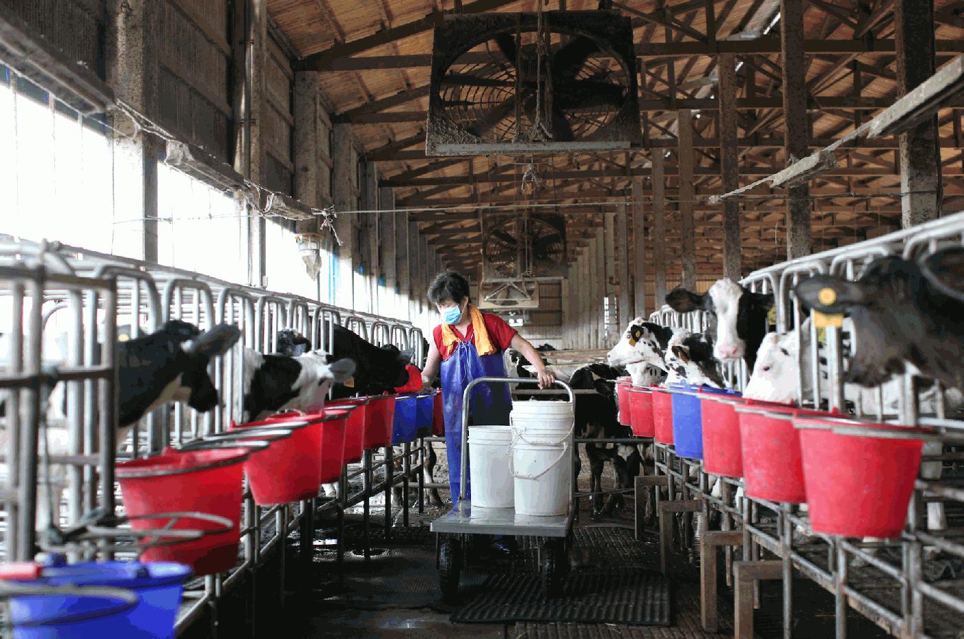 3年育種研發!鮮乳坊推台灣第一支「A2鮮奶」募資案,新品上架的策略思路是什麼?