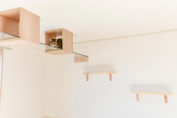 "img 1589534312 66217@900 - 最""猫性化""的公寓!玻璃猫咪步道、木质猫跳台,日本打造猫奴专属公寓"