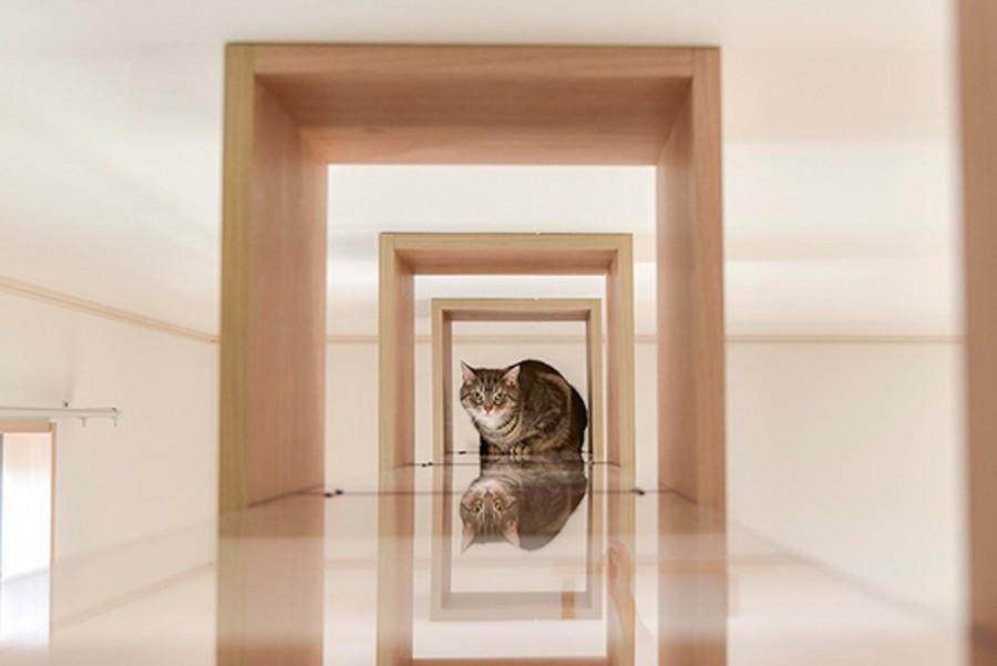 "img 1589786128 41267@900 - 最""猫性化""的公寓!玻璃猫咪步道、木质猫跳台,日本打造猫奴专属公寓"