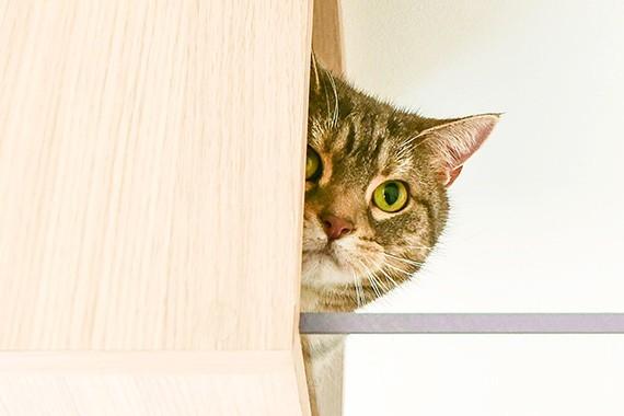 "img 1589786135 66360@900 - 最""猫性化""的公寓!玻璃猫咪步道、木质猫跳台,日本打造猫奴专属公寓"