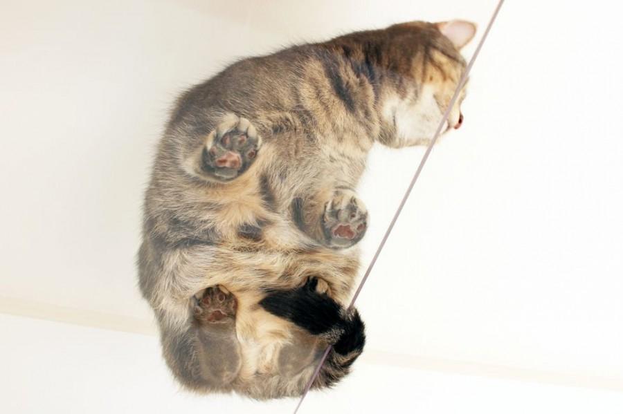 "img 1589786137 46329@900 - 最""猫性化""的公寓!玻璃猫咪步道、木质猫跳台,日本打造猫奴专属公寓"