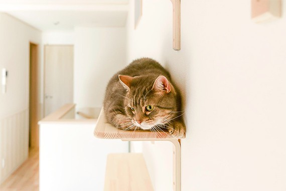 "img 1589786140 49382@900 - 最""猫性化""的公寓!玻璃猫咪步道、木质猫跳台,日本打造猫奴专属公寓"
