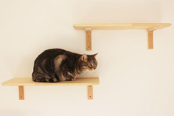 "img 1589786147 32102@900 - 最""猫性化""的公寓!玻璃猫咪步道、木质猫跳台,日本打造猫奴专属公寓"