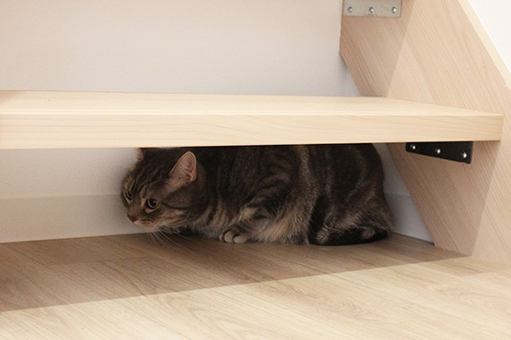 "img 1589786174 93143@900 - 最""猫性化""的公寓!玻璃猫咪步道、木质猫跳台,日本打造猫奴专属公寓"
