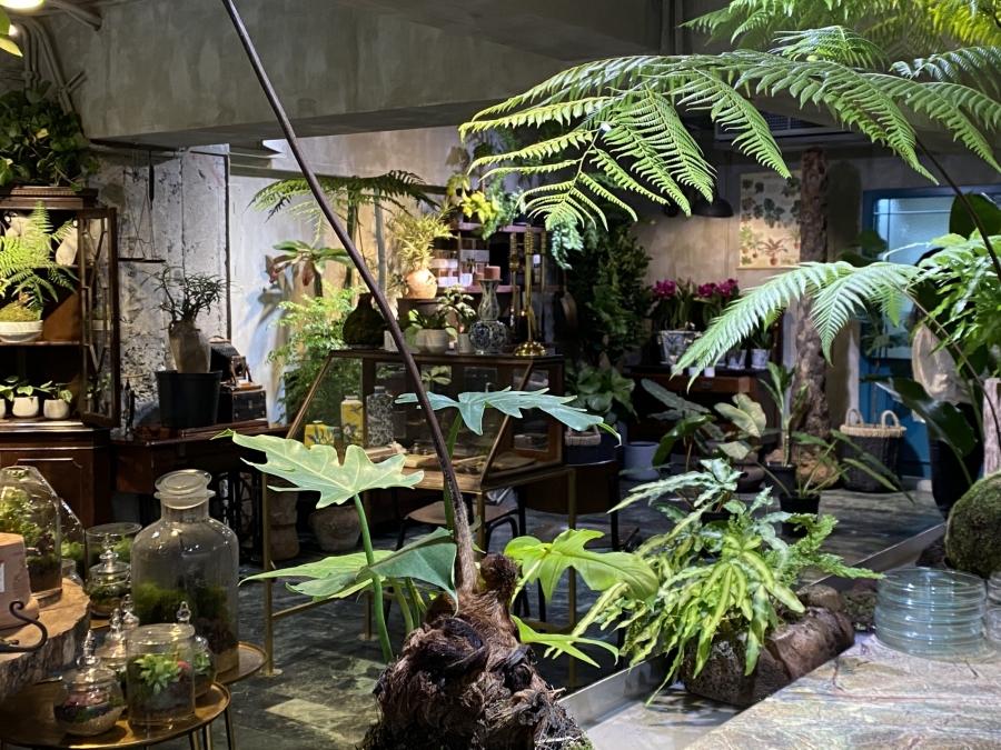 植物愛好者必訪!台北植物專賣店「樹園藝」:集結植栽、古物老件、質感器皿的療癒選物空間