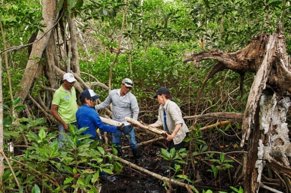 Apple_Mangroves_Two-Men-and-Two-Women-Woods-Forest