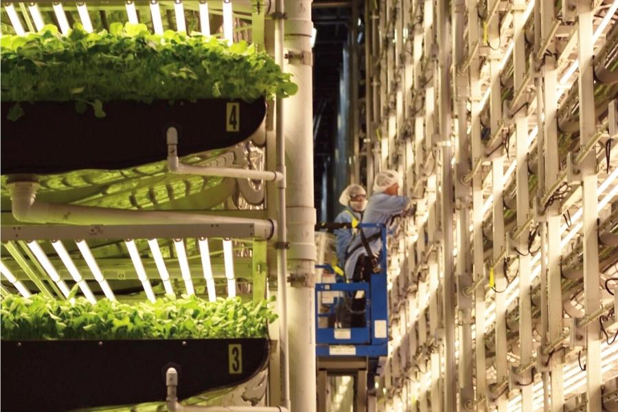 AeroFarms 垂直農業