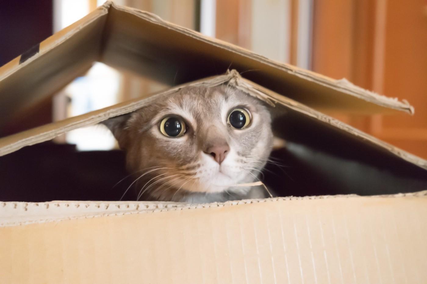 數據圖表拆解毛小孩商機!養貓人數居然輸給牠、寵物用品市佔第一電商是哪家?